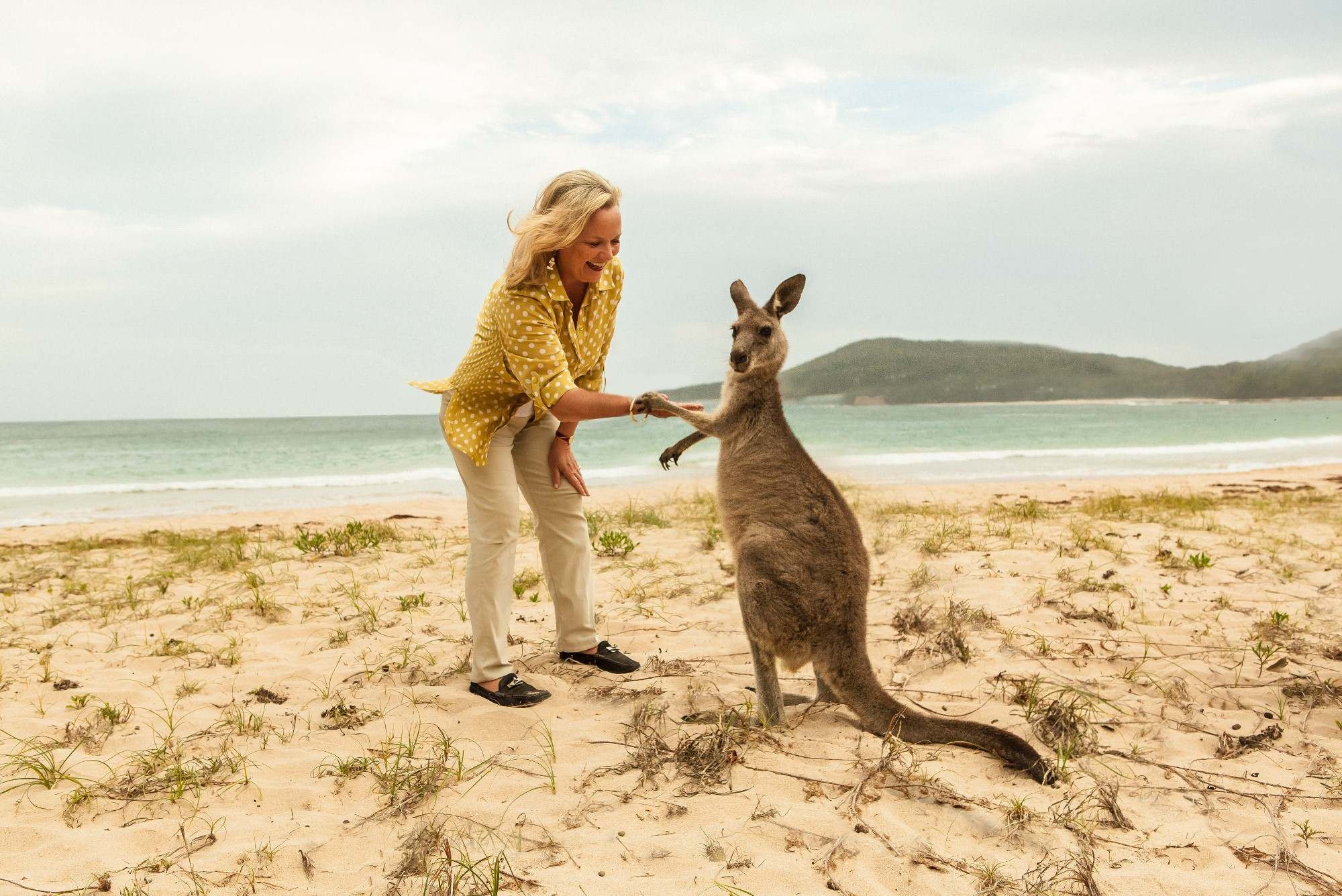 Lyndey Milan feeds kangaroo